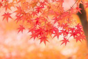 秋の京都イメージ